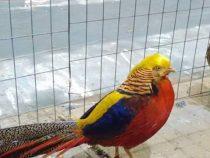 Međunarodna izložba sitnih životinja (foto)