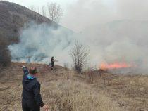 Izgorelo preko 20 hektara šume i vinograda na prostoru sela Ostrovica